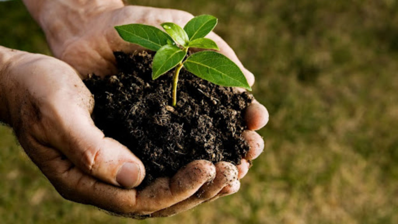 What is a soil test? | Dreamlawns Lawn Care